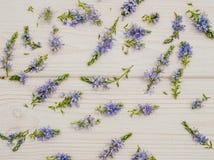 Achtergrond in de stijl van de Provence Gevoelige blauwe korenbloemen en wit hout Royalty-vrije Stock Fotografie