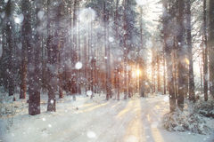 Achtergrond de winterbos Royalty-vrije Stock Foto's