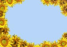 Achtergrond - decoratief kader van zonnebloemen Stock Afbeeldingen