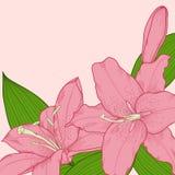 Achtergrond die met mooie roze lelies in de hoek wordt verfraaid Stock Fotografie