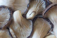 Achtergrond die van Pleurotus-de Paddestoelen van de ostreatusoester, omhoog door kieuwen kijken royalty-vrije stock foto's