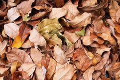 Achtergrond - droog Bladeren Royalty-vrije Stock Fotografie