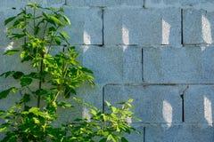 Achtergrond, een muur van grote grijze baksteenblokken met een driehoekig ornament, schaduwen van de zon royalty-vrije stock foto