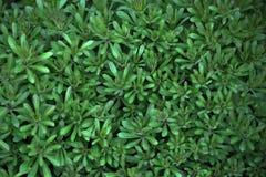 Achtergrond en textuur van groene plants_2 Stock Foto