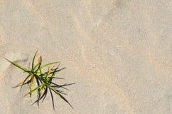 Achtergrond en textuurfoto van zand op het strand stock afbeeldingen