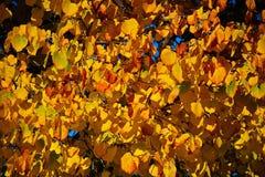 Achtergrond geel en gouden de herfstbladeren Royalty-vrije Stock Fotografie