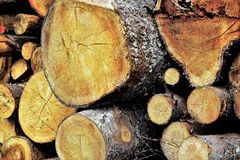 Achtergrond gemorste bomen, zaagmolen Royalty-vrije Stock Foto