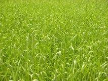 Achtergrond-gras Royalty-vrije Stock Afbeeldingen