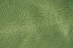 Achtergrond groene tropische bladereninstallatie Tropische palm van het textuur de groene gebladerte royalty-vrije stock foto