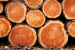 Achtergrond houten-stapels Stock Fotografie