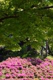 Achtergrond/kleurrijk seizoen Stock Afbeeldingen