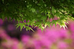 Achtergrond/kleurrijk seizoen Stock Foto
