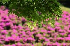 Achtergrond/kleurrijk seizoen Stock Foto's