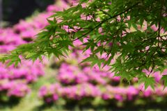 Achtergrond/kleurrijk seizoen Stock Afbeelding