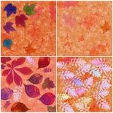 Achtergrond, kleurrijke bladeren Stock Foto