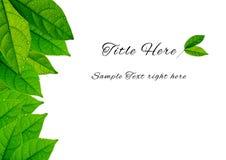 Achtergrond/Malplaatje van groene bladeren met de waterdaling Stock Foto's