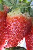 Achtergrond met aardbeien Stock Foto's