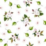 Achtergrond met appelbloemen Stock Fotografie