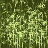 Achtergrond met bamboe. Royalty-vrije Stock Fotografie