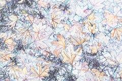 Achtergrond met bladeren Royalty-vrije Stock Foto
