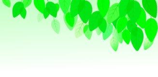 Achtergrond met bladeren en hemel Royalty-vrije Stock Afbeeldingen