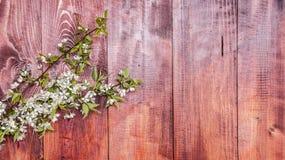Achtergrond met bloeiende de lentetakken van pruimen Stock Afbeeldingen