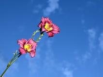 Achtergrond met bloem Stock Afbeeldingen