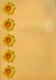 Achtergrond met bloemenelementen Royalty-vrije Stock Fotografie