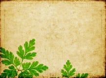 Achtergrond met bloemenelementen Stock Afbeelding
