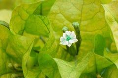 Achtergrond met bloementhema Stock Foto's