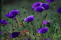 Achtergrond met bloementhema Stock Foto