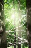 Achtergrond met bomen en zonstralen royalty-vrije stock afbeelding