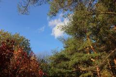 Achtergrond met boombovenkanten Stock Foto's