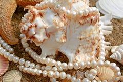Achtergrond met cockleshells en parels Royalty-vrije Stock Foto