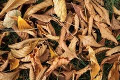 Achtergrond met de herfstbladeren Stock Foto's