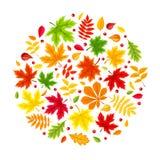 Achtergrond met de kleurrijke Bladeren van de Herfst Vector illustratie Royalty-vrije Stock Foto
