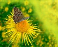 Achtergrond met de vlinder Royalty-vrije Stock Foto
