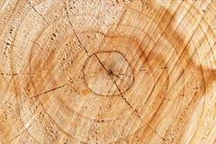 Dwarsdoorsnede van boom Stock Afbeeldingen