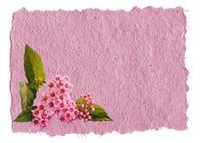 Achtergrond met een bloem Stock Afbeelding
