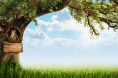 Achtergrond met een boom en een uil Stock Foto's