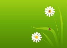 Achtergrond met een lieveheersbeestje Stock Afbeelding
