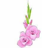 Achtergrond met een roze bloem Stock Afbeelding