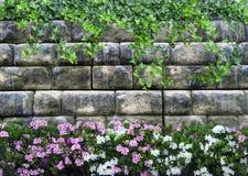 Achtergrond met een steenmuur van krullende installaties en mooie bloemen Stock Afbeeldingen