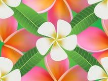 Achtergrond met frangipanibloemen en bladeren Stock Foto