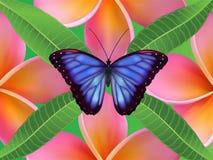 Achtergrond met frangipanibloemen en bladeren en Stock Foto's