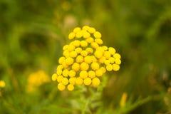 Achtergrond met gele bloem Stock Fotografie