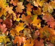 Achtergrond met gevallen de herfstbladeren stock afbeelding