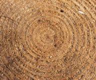 Achtergrond met gezaagde boomboomstam De textuur van de jaarringen Royalty-vrije Stock Fotografie