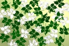 Achtergrond met groene en witte bladeren Stock Foto