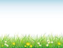 Achtergrond met het gras en de bloemen Royalty-vrije Stock Foto's
